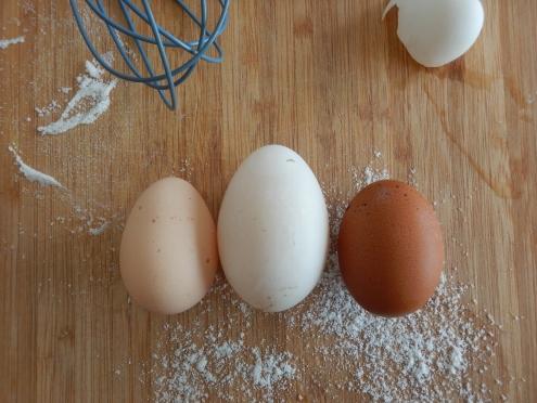Australorp egg, duck egg, Maran egg