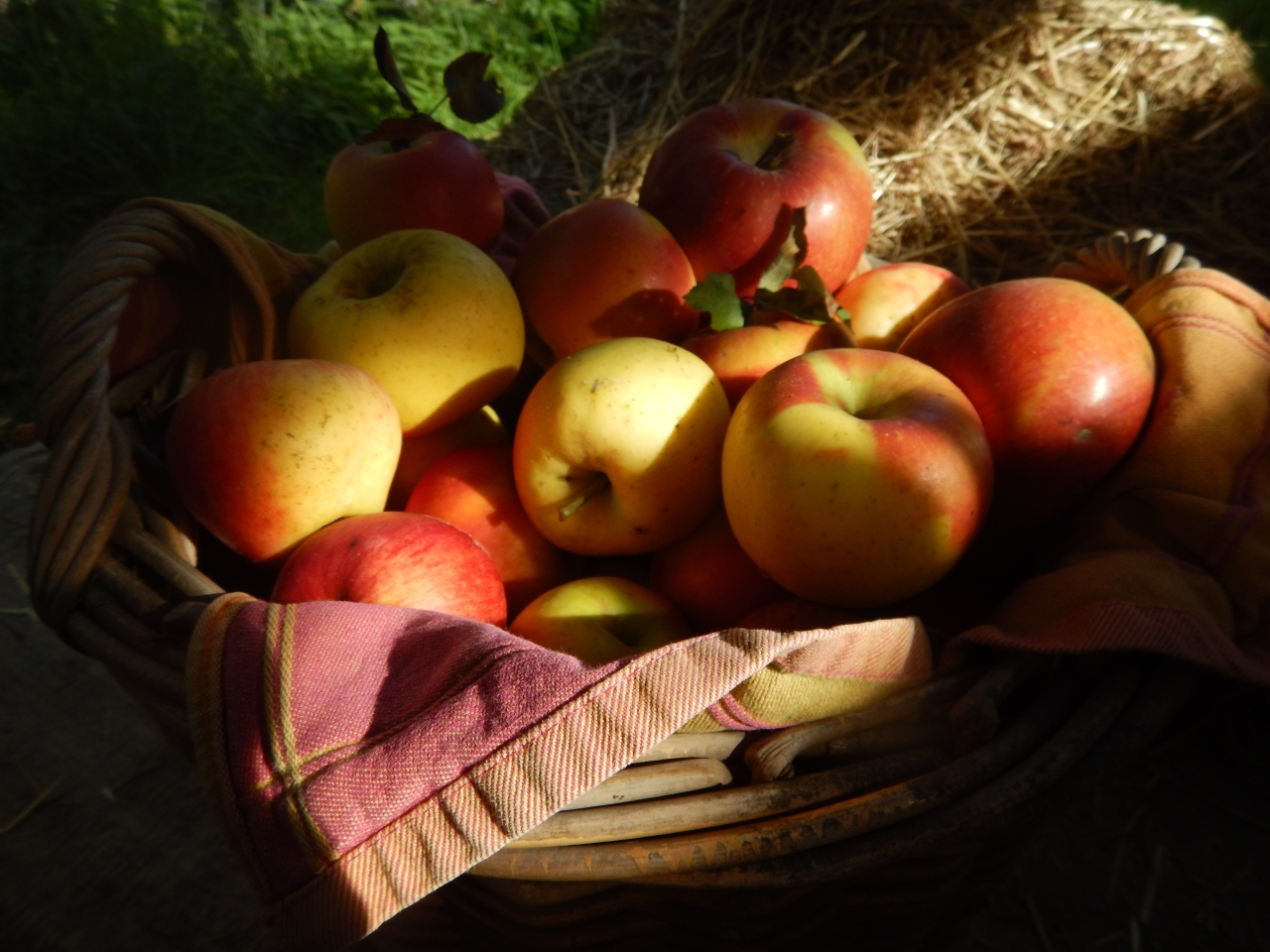 Apple varieties for permaculture gardens