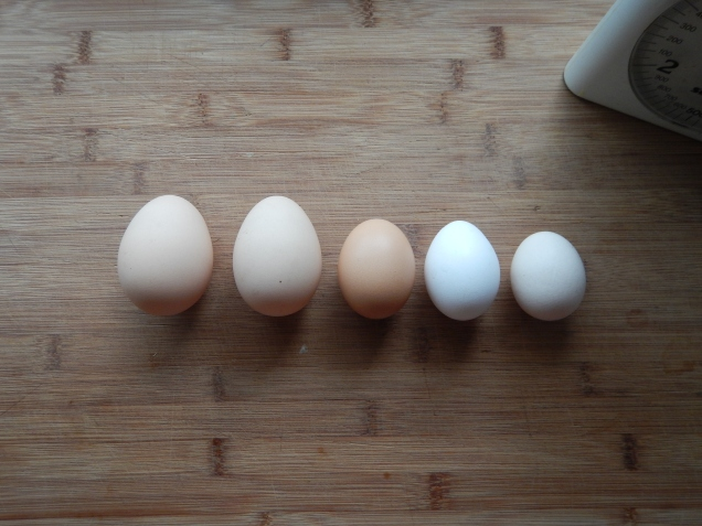 Two double yolkers, Australorp, Leghorn, Orpington bantham