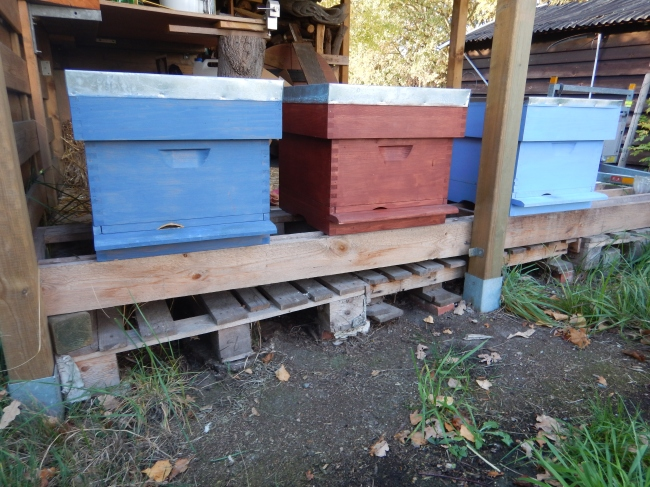 My beautiful Simplex hives