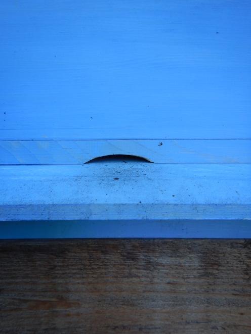 Dirty bee feet markings