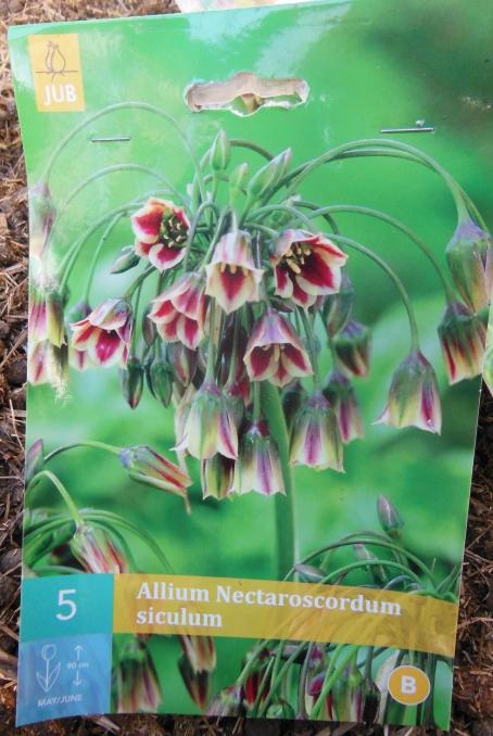 Allium nectaroscordum siculum