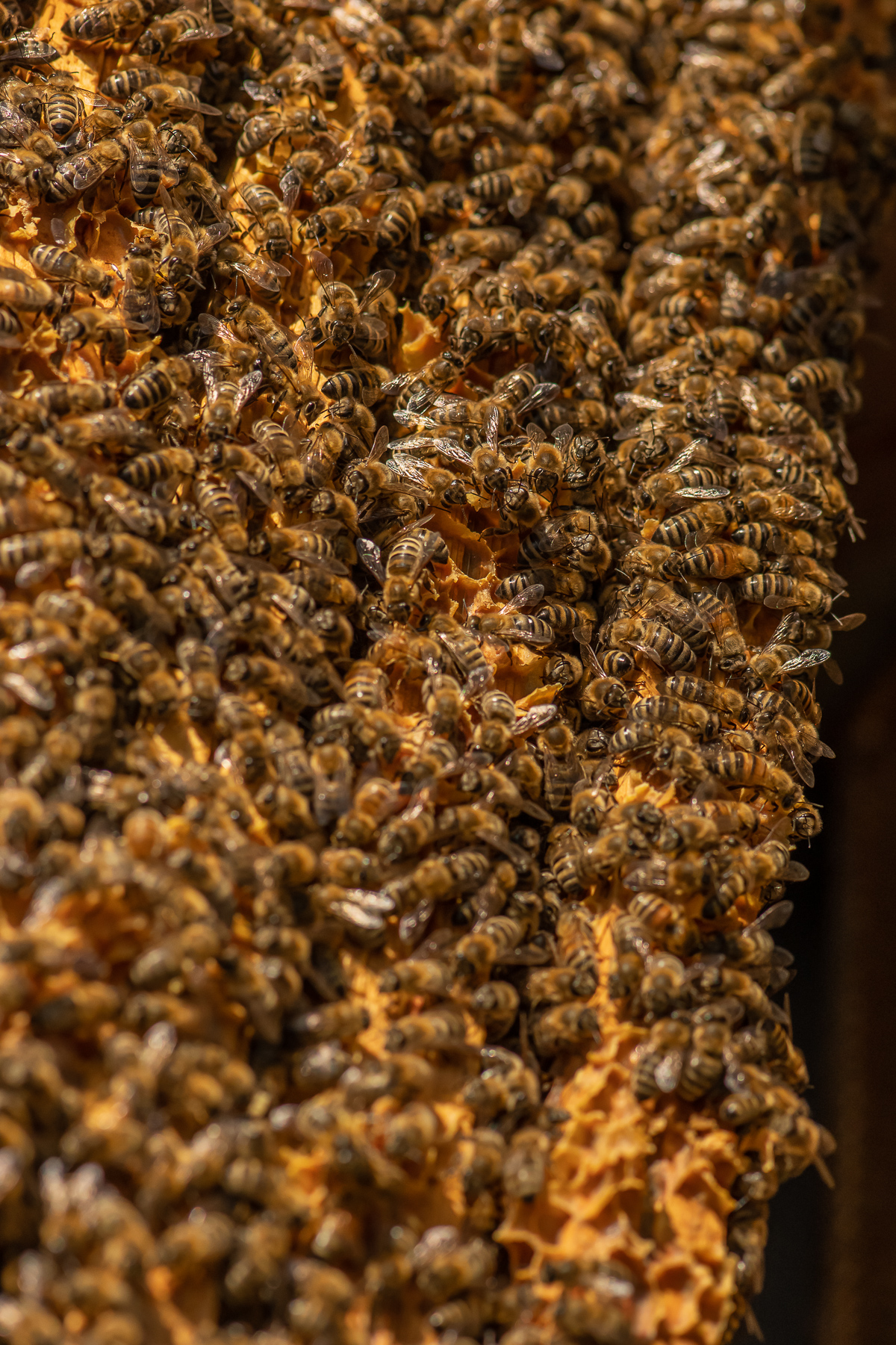 Multiplying hives and growing new colonies