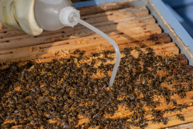 pour directly on the bees and in between the frames