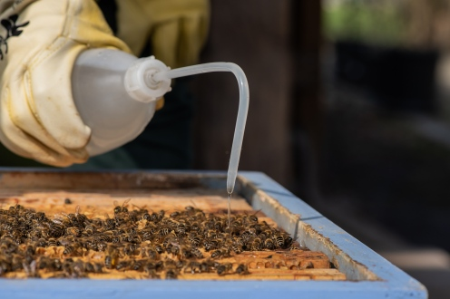 Lightly pour som syrup on frames with less bees on them