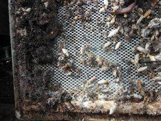 Horrid wax moth mess